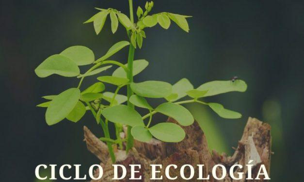 El sacrificio de los bosques del Gran Chaco